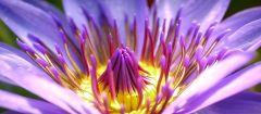 fiore picc