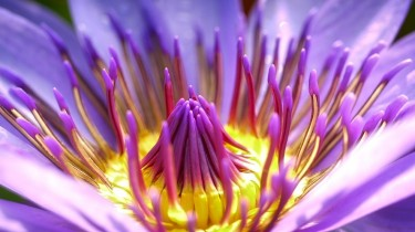 flower-2919284_1280 - Copia